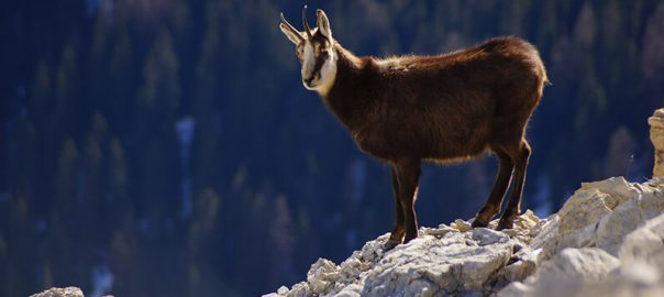 The origin of the word 'scapegoat' and its connection to Yom Kippur